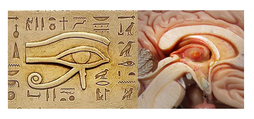 human-brain-pineal-eye-of-horus